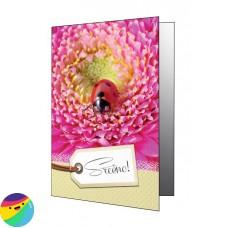 Voščilnica - Pikapolonica na cvetu